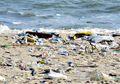 Untuk Lingkungan Tetap Sehat, Yuk Kurangi Sampah Plastik dengan Cara Ini