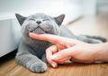 Meski Sudah Terjaga Kebersihannya, Kita Wajib Waspada Saat Anak Bermain dengan Kucing, Ini Daftar Penyakit yang Bisa Menyerang Anak