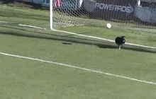 Pertandingan Sepak Bola Divisi Tiga di Argentina Diwarnai Aksi Heroik Seekor Anjing