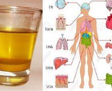 Minum 1 Gelas Air Kunyit di Pagi Hari, Lihat Apa Yang Akan Terjadi pada Tubuh!