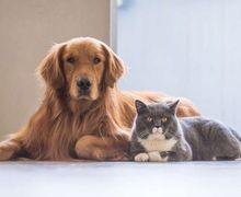 Walah, Ternyata Inilah Alasan Mengapa Anjing dan Kucing Tidak Pernah Akur