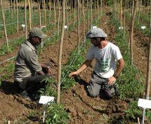 Gara-gara Teknologi Canggih Israel, Etiopia yang Sangat Miskin Akhirnya Jadi Surga Pertanian nan Makmur!