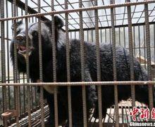 Dikira Anak Anjing, Sebuah Keluarga di China Tak Sadar Telah Membesarkan Beruang Langka Selama 2 Tahun