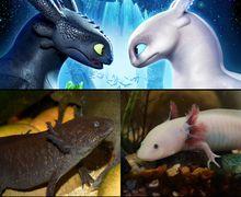 Hewan Ini Mirip Night Fury & Light Fury di How To Train Your Dragon 3
