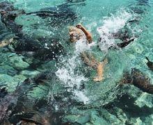 Asyik Berpose saat Liburan di Pantai, Model Cantik Katarina Zarutski Diterkam Hiu