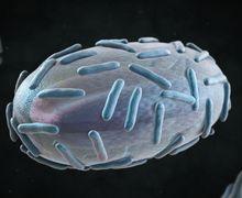Dari Ebola Sampai HIV, Inilah 9 Virus Paling Mematikan di Dunia, Pernah Bunuh Jutaan Orang!