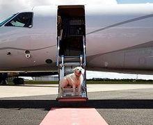 Orang Kaya Mah Bebas, Sewa Pesawat Hanya Untuk Bawa Burung Beo