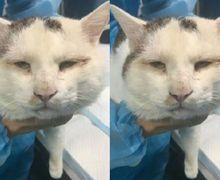 Bukan Cuma Manusia, Wajah Kucing Ini pun Menjadi Lebih Cantik Setelah 'Operasi Plastik'