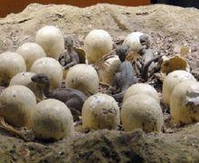 15 Telur Dinosaurus Berumur 80 Juta Tahun Ditemukan di Tiongkok