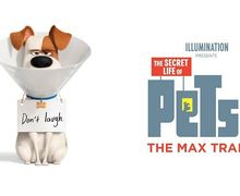 Max and Friends Siap Menghibur Lagi di The Secret Life of Pets 2!