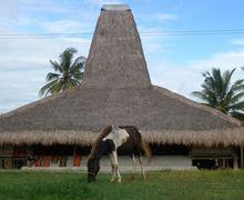 Melihat Rumah Adat dan Kain Tenun Khas Kampung Adat Prailiu
