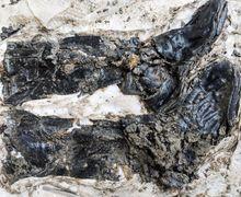 Unik, Kerangka dari Abad Pertengahan Ditemukan Memakai Sepatu Bot