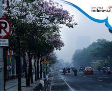 Nggak Perlu ke Jepang, Di Surabaya ada Jalan Bertaburan Bunga Sakura!