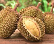 Banyak Dihindari Karena Baunya yang Tajam, Ternyata Durian Punya 3 Manfaat Sensasional Ini untuk Tubuh!