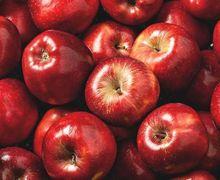 Meski Sumber Nutrisi, Buah Apel Tak Boleh Dikonsumsi Dua Orang dalam Kondisi Ini
