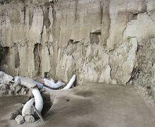 Lebih Dari 800 Tulang Mamut Ditemukan di Situs Kuno Meksiko