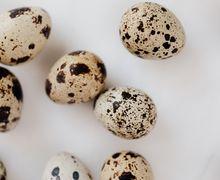 Bermanfaat, Telur Puyuh Bisa Cegah Penyakit Kronis hingga Tingkatkan Kesehatan Jantung