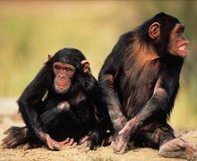 Lima Hewan Ini Bisa Membantu Menyembuhkan Penyakit Manusia