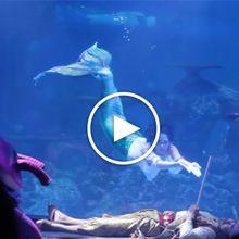 [VIDEO] DOKUMENTER - Keseharian Nikita Fima (Putri Duyung Jakarta Aquarium)