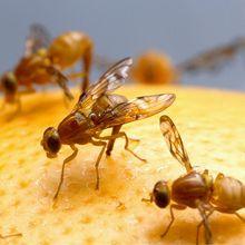 5 Cara Mengusir Lalat di Rumah dengan Bahan Alami, Terbukti Ampuh!