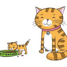 Teman-teman Punya Kucing? Jangan Lupa Ketahui 7 Hal Seputar Kucing Ini
