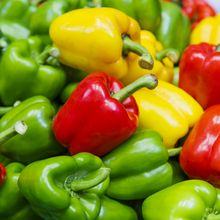 Apakah Paprika dengan Warna yang Berbeda Berasal dari Pohon yang Sama?