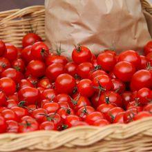 Ilmuwan Mencoba Menanam Tomat di Ruang Angkasa dengan Bantuan Urin