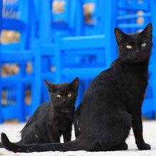 Bukan Hanya di Mesir, Kucing Juga Pernah Dipuja di 6 Tempat Ini