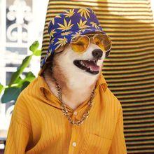 Seperti Manusia, Apa Anjing Juga Merasa Malu Saat Memakai Kostum Aneh?
