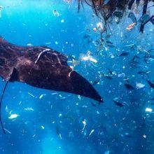 Banyak Hewan yang Mengira Plastik adalah Makanan, Apa Sebabnya?