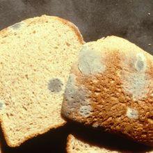 Ini yang Akan Terjadi Pada Tubuh Anda Jika Makan 'Bagian Bersih' Roti Berjamur