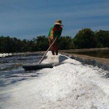 Penelitian Ungkap Garam Meja Asli Indonesia Banyak Mengandung Mikroplastik, Apa Bahayanya Bagi Tubuh?