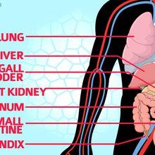 Marak Dijual di Pasar Gelap, Ternyata Segini Harga Organ Tubuh Manusia