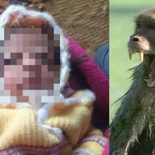 Berusia 12 Hari, Bayi Ini Tewas Mengenaskan di Tangan Seekor Monyet Ketika Disusui sang Ibu