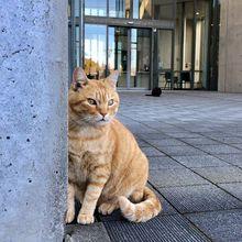 Selama 2 Tahun, Kucing Ini Berusaha Memasuki Sebuah Museum di Jepang