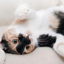 Kenapa Kucing Sangat Suka dengan Tanaman Catnip, Cari Tahu, Yuk!