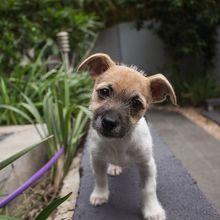 Anjing Berukuran Kecil Justru Lebih Galak, Benar atau Tidak, ya?