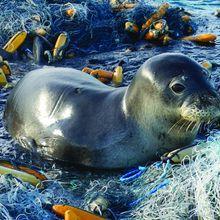 Di Samudra Pasifik, Ada Tempat Sampah Lautan Terbesar! Apa Isinya?