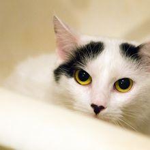 5 Kebiasaan Aneh Kucing yang Kadang Bikin Kesal, tapi Kadang Gemas Juga
