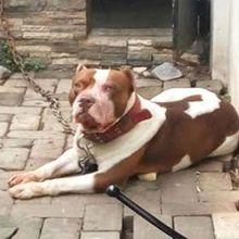 Digigit Seekor Anjing hingga dapat 22 Jahitan di Tubuh, Pria Ini cuma Terima Uang 100 Ribu untuk Ganti Rugi