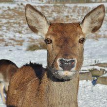 Mata Rusa Kutub Bisa Berubah Warna Sesuai Musim, Kok Bisa, ya?