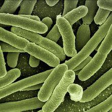 Yuk, Kenali Bakteri yang Bisa Menyebabkan Diare!