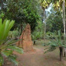 Taman Nasional Wasur, Keunikan di Ujung Timur Republik Indonesia