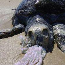 Begini Penjelasan Kenapa Hewan Laut Mengira Sampah Plastik Adalah Makanan!