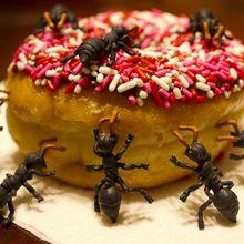 Waspada! Tidak Sengaja Menelan Semut Atau Serangga Lainnya Ternyata Bisa Berbahaya! Begini Penjelasannya