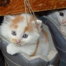 Meski Sepatu Kita Bau, Kucing Menyukainya! Kenapa Bisa Begitu, ya?