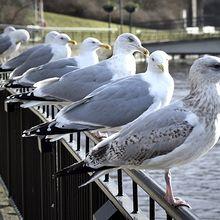 Inilah 5 Jenis Burung Paling Berbahaya di Dunia, Pernah Melihatnya?