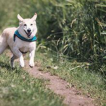 Selain Terapi, Ternyata Anjing Bisa Mendeteksi Kanker Lewat Air Liur