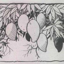 Cerpen Anak: Pohon Mangga Pak Karjo