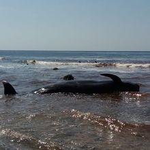 Ditemukan Kadar Polutan Beracun yang Tinggi Pada 83 Paus dan Lumba-lumba